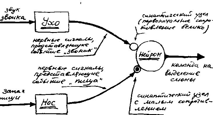 условный рефлекс схема